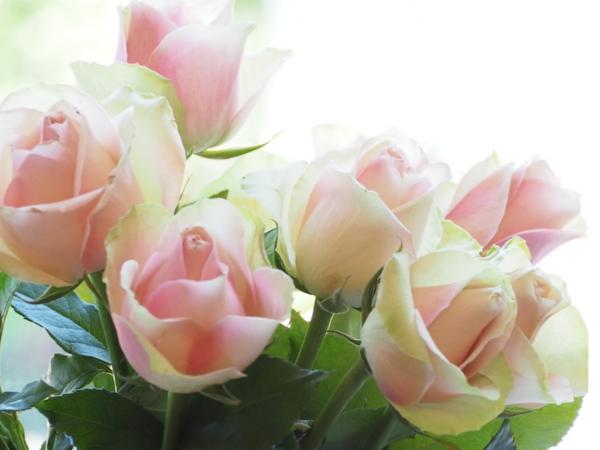 Ruusuni ovat upeimmillaan ja stadikakin aukesi