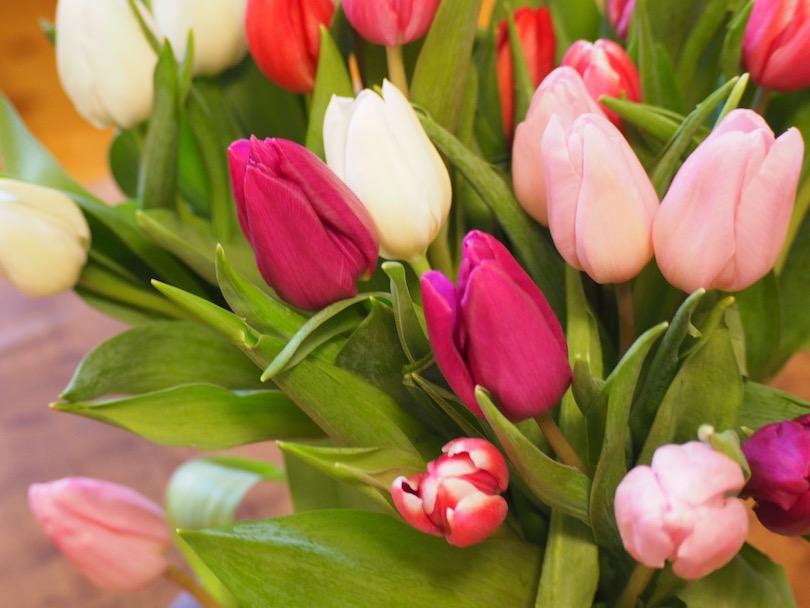 Aalto-vaasin ja tulppaanien arvoitus
